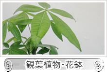 観葉植物・花鉢