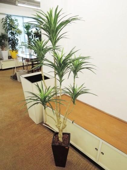 造花アート観葉植物(コンシンネ)のイメージ