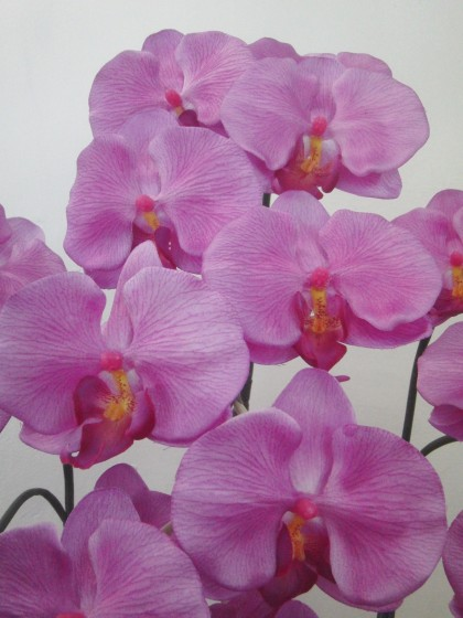 光触媒造花胡蝶蘭(濃いピンク・陶器付)のイメージ2