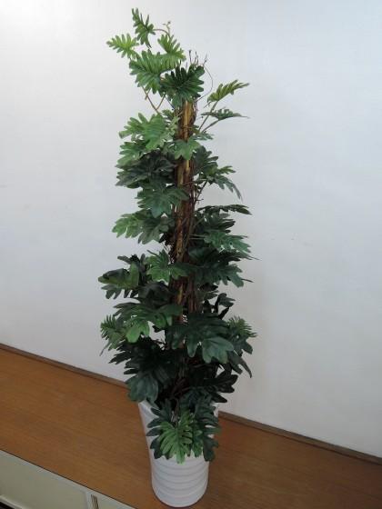 造花観葉植物(クッカバラ)のイメージ