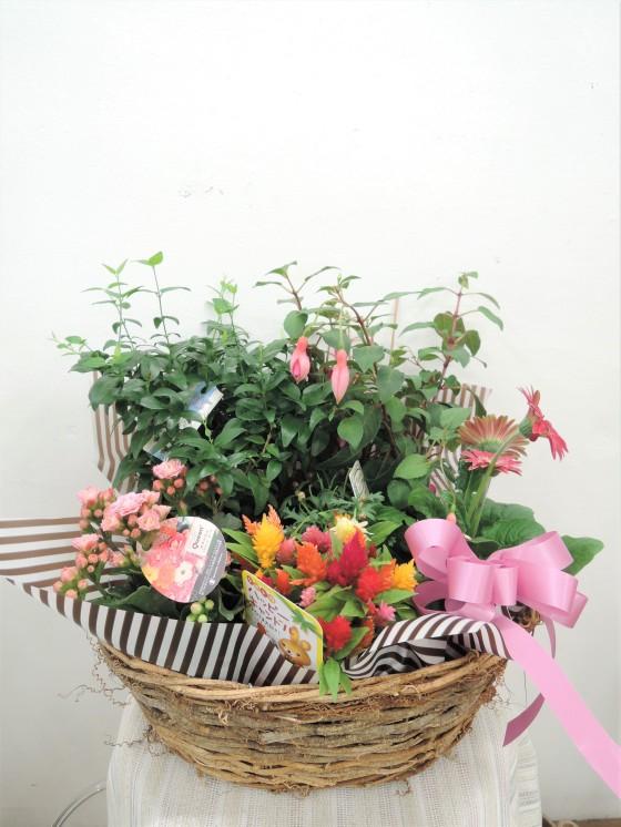 お花の寄せ鉢のイメージ